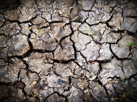 IPROMA desarrolla una nueva metodología mediante QuECherS para análisis de suelos contaminados